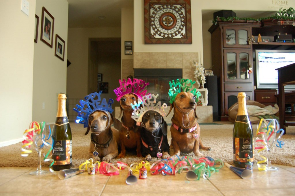 Dachshunds New Year