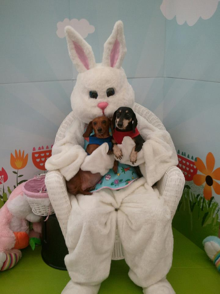 Doxies with the Easter Bunny